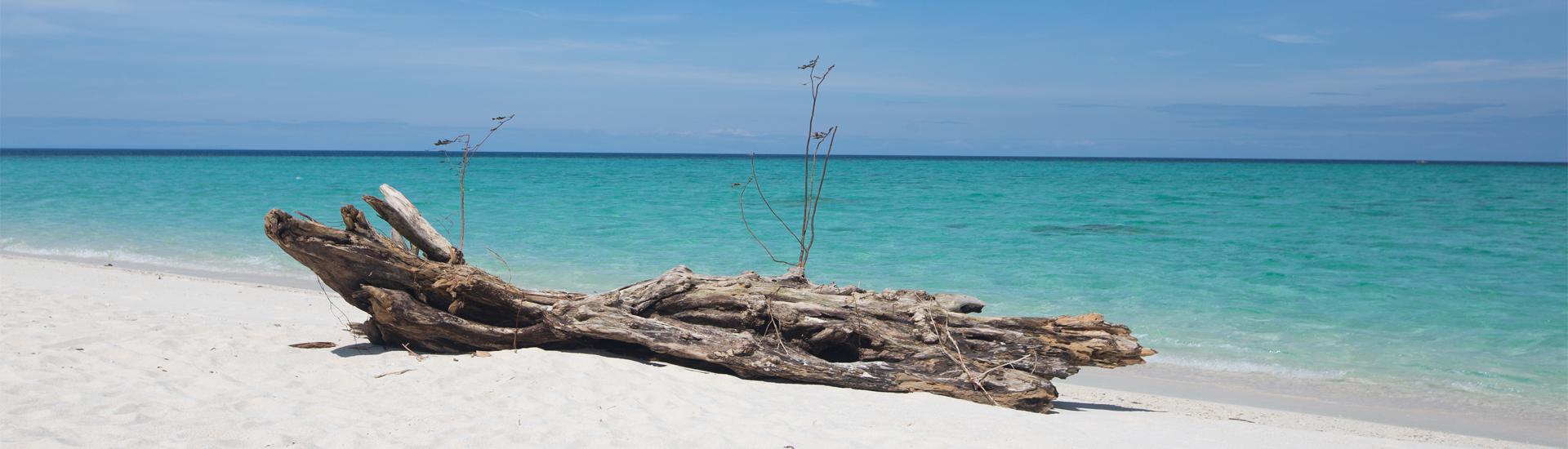 About the philippines magic oceans resort - Magic oceans dive resort ...