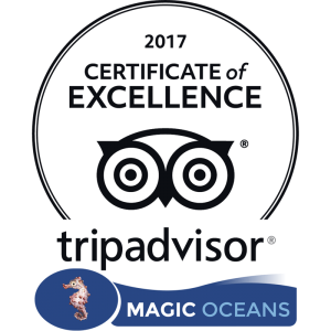 Tripadvisor certificate of Excellence Magic Oceans Dive Resort Anda Bohol Philippines