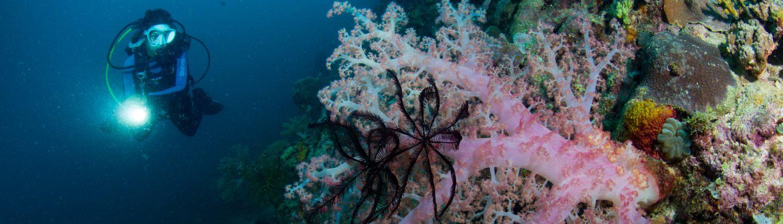 Diving Magic Oceans Camiguin island
