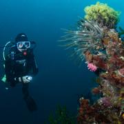 Dive trip to Camiguin Island Magic Oceans