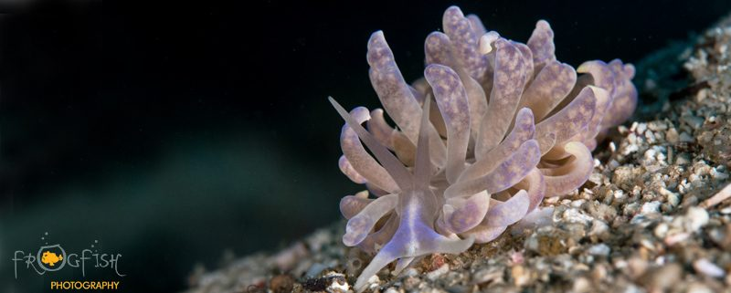 Night dive Magic Oceans by Frogfish Photography