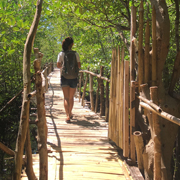 Bamboo bridge - Lamonok