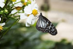 Butterfly Farm Bohol Magic Oceans