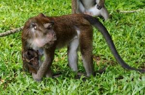 Sightseeing Macaque Magic Oceans Bohol