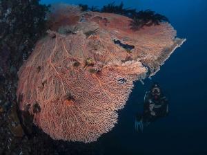 Diving in Anda